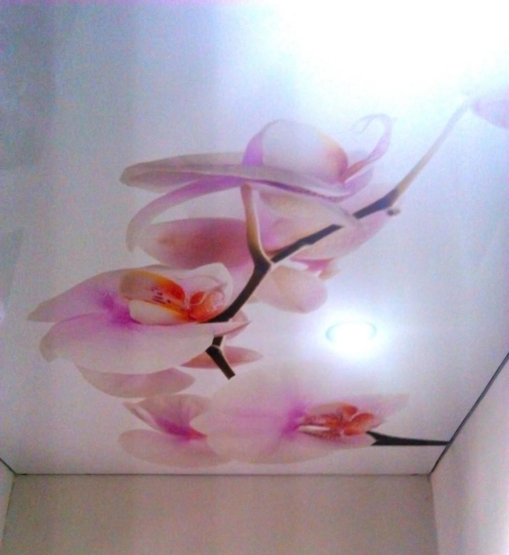 Натяжные потолки фотообои цветы фото