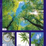 Лето 2013 - каталог самых популярных картинок фотопечати на натяжных потолках