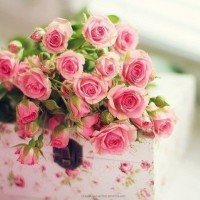 Елену Токареву и Оксану Фролову поздравляем с Днем Рождения!