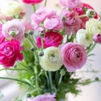 Елену Перову поздравляем с Днем Рождения!
