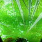 Зеленый - цвет благополучия